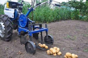 Обзор картофелекопалок для мотоблока Нева: как выбрать лучшую, настроить