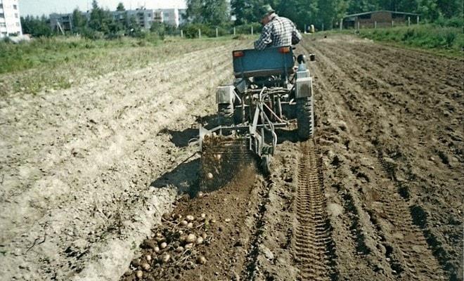 Процесс высаживания картошки
