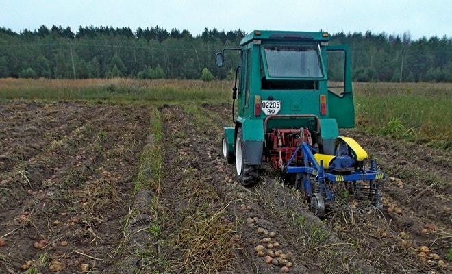 Трактор сажает картофель
