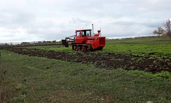 Волгарь в поле