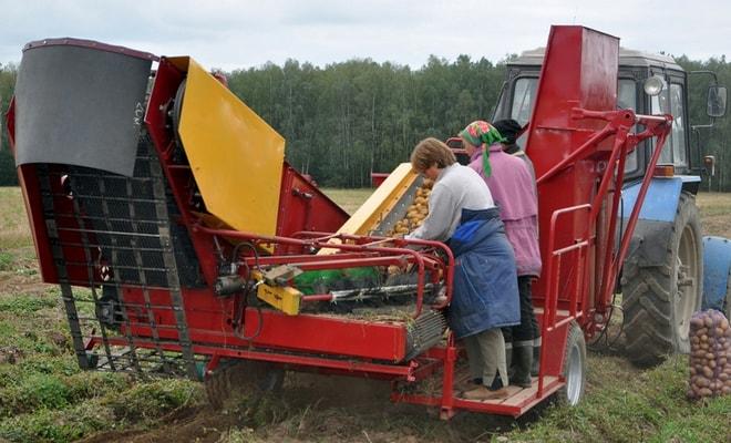Картофелеуборочный агрегат в поле
