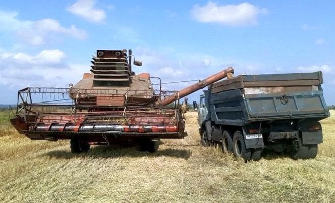 Выгрузка пшеницы из комбайна