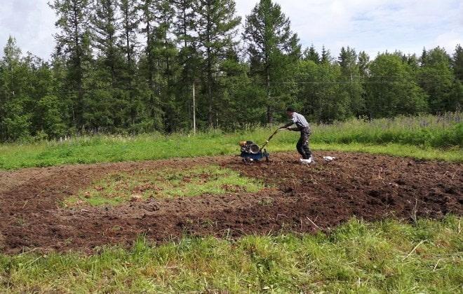 Культивирование огорода